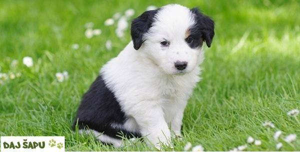 Psi - kupanje, šišanje, čišćenje ušiju i rezanje noktiju