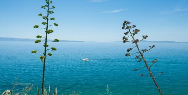 izlasci plavog oceana