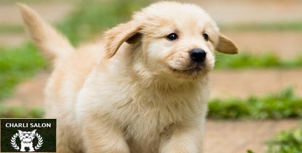 Psi - kompletna njega za vašeg ljubimca