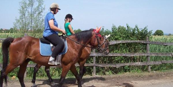 Škola jahanja - 2 sata jahanja i priprema konja