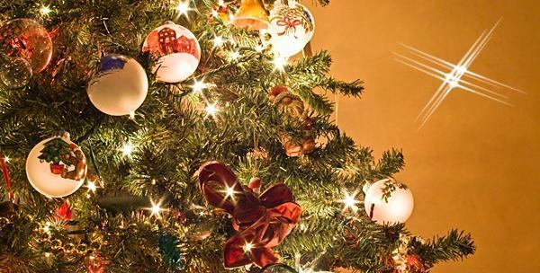 Božićna smreka do 3 metra visine - uživajte u božićnoj čaroliji za 79 kn!