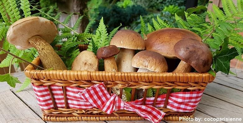 Dan gljiva u staroj Sušici uz posjet izletištu Kamačnik za 119 kn!