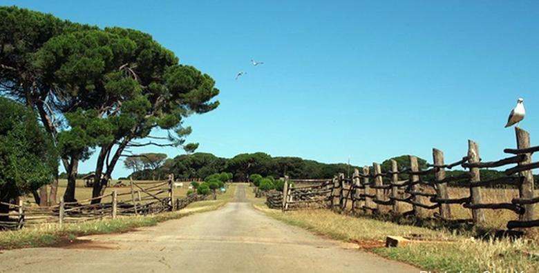 Ponuda dana: BRIJUNI I PULA Provedite dan u istraživanju safari parka i uživanju u prekrasnoj prirodi uz uključen razgled Pule za 229 kn! (Putnička agencija Autoturist - Park ID kod: HR-AB-01-080015747)