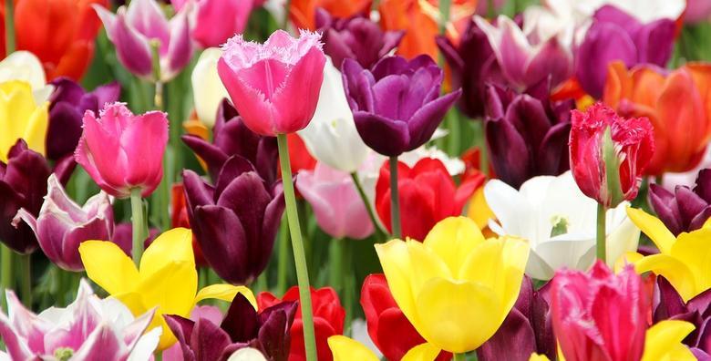Pordenone i sajam cvijeća u Italiji - cjelodnevni izlet s prijevozom za 219 kn!