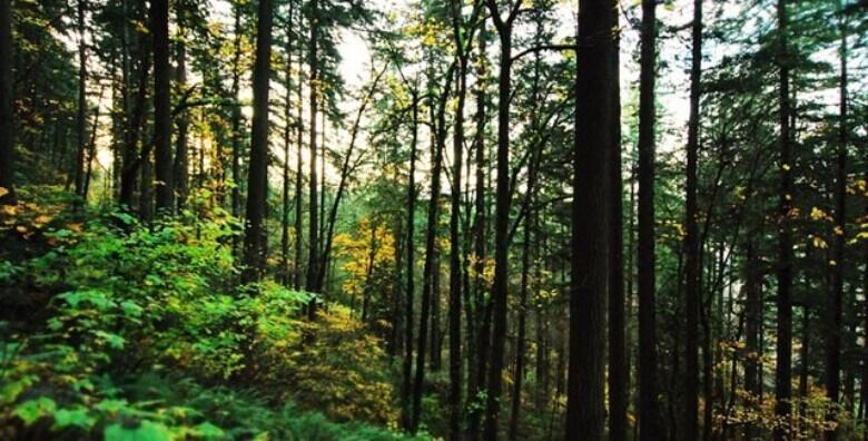 Prošećite park šumom Golubinjak koja će vas očarati prirodnim ljepotama i posjetite Lokve za 129 kn!