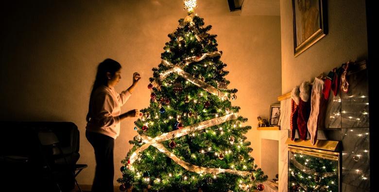 Božićna smreka visine 1,2 do 3 metra
