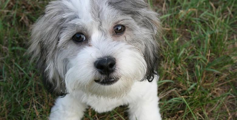 Njega pasa - kompletna njega za vašeg ljubimca