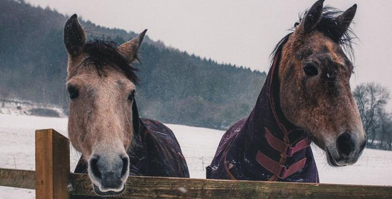 JAHANJE - provedite 2 školska sata u druženju s plemenitim konjima, škola za početnike ili napredne uz iskusne trenere i uključenu opremu za 99 kn!