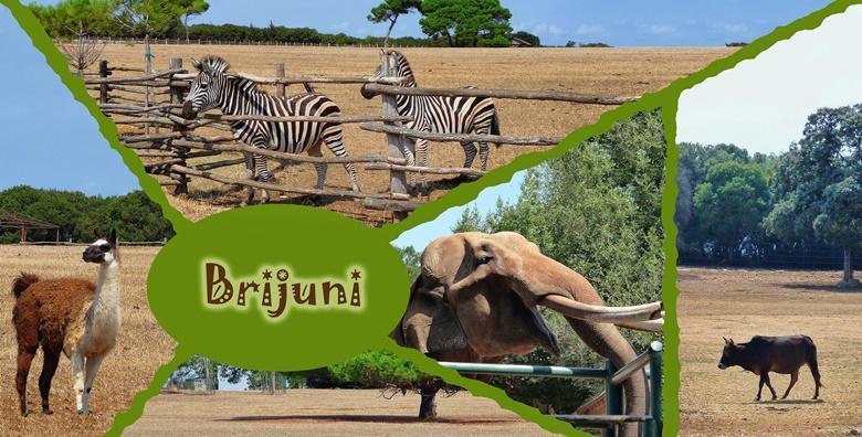 Ponuda dana: NP BRIJUNI - upoznajte bogatu povijest i prirodne ljepote otočja uz posjet pulskoj Areni, Slavoluku, Forumu i Augustovom hramu za 225 kn! (Smart TravelID kod: HR-AB-01-070116312)