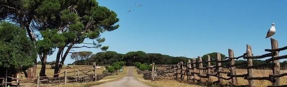 NP BRIJUNI - doživite netaknutu prirodu nacionalnog parka i provjerite zašto ga zovu rajem na zemlji, uključen i razgled Pule za 239 kn!