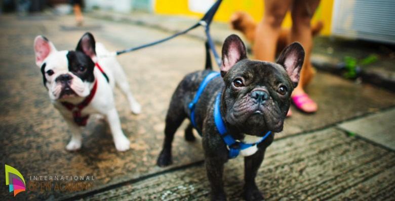 Dresura psa - online tečaj kojim postižete trajnu povezanost sa svojim psom za samo 39 kn!