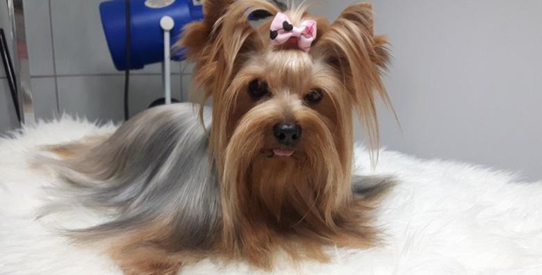 POPUST: 51% - Njega za kratkodlake i dugodlake pse do 15kg - kupanje, šišanje, trimanje, čišćenje ušiju i skraćivanje noktiju za samo 99 kn! (TOP DOG salon za njegu i šišanje pasa)