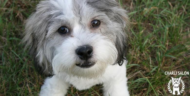 Njega pasa, Zapruđe ili Oranice - kupanje, šišanje, rezanje noktiju i trimanje za samo 99 kn!