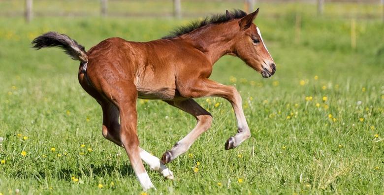 [WINNETOU RANCH BARILOVIĆ] Upoznajte konje i okušajte se u jahanju!Provedite 2 sata s predivnim plemenitim životinjama u prirodi za 129 kn!
