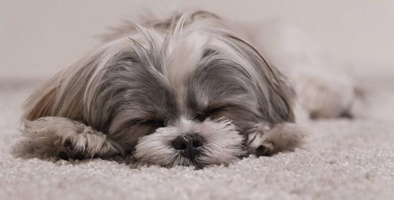 POPUST: 34% - NJEGA PASA DO 10 KG Kompletan tretman uz uključeno kupanje, šišanje, rezanje noktiju i čišćenje ušiju za samo 99 kn! (Salon za pse Mali put)