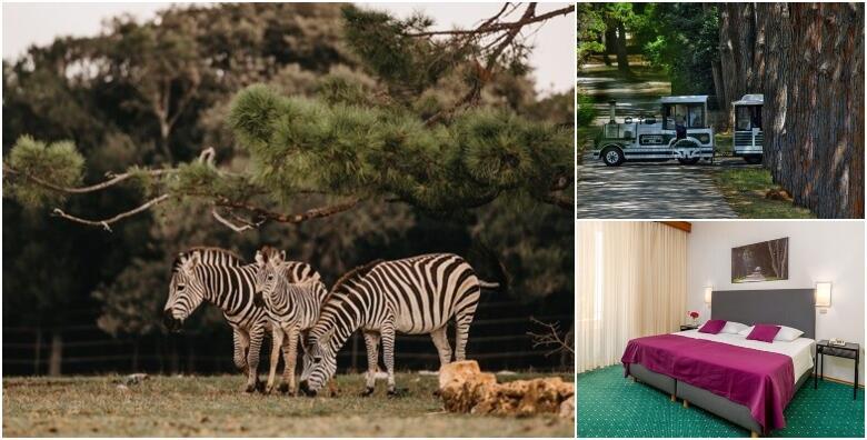 BRIJUNI - oduševite se prirodnom oazom uz 2 noćenja s polupansionom za dvije osobe + gratis paket za 1 dijete do 3,99 godina u Hotelu Neptun 3* za 1.200 kn!