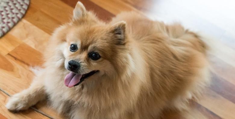 Njega malih pasa - kompletan tretman šišanja, kupanja, čišćenja i uređivanja za 99 kn!