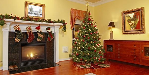Božićna smreka visine od 1,5m do 3m