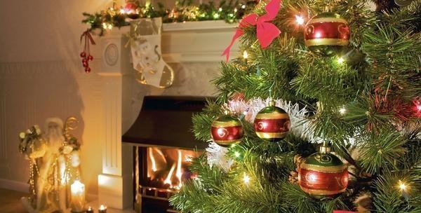 Božićno drvce visine od 1,2m do 2,3m