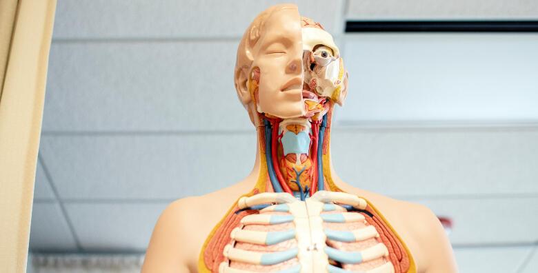 Ekspresna analiza tijela za 500 kn!
