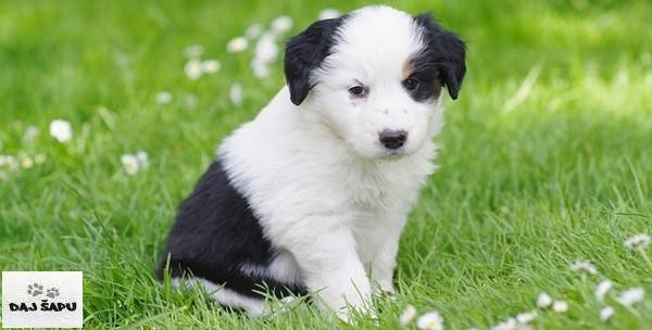 Psi - kupanje, šišanje, čišćenje ušiju, rezanje noktiju